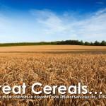 Biosolids fertiliser field of corn